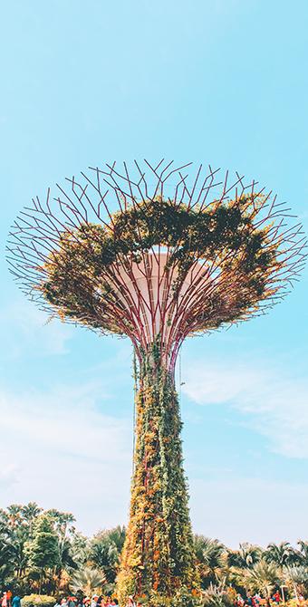Сингапур. Восьмое чудо света