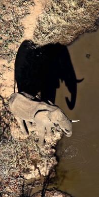 Слон на танцполе. Как Герман Греф и его команда учат Сбербанк танцевать