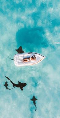 Как плавать среди акул и не быть съеденным заживо