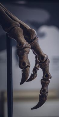 Humanimal. Как Homo sapiens стал самым противоречивым существом природы — новая эволюционная история